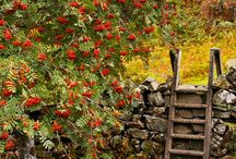 snowdonia bwlch farm