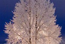 ÁRBOLES - PLANTAS / árboles...... / by Elena González D.