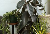 INDOORS   The Planthunter / Images of indoor plants from stories published on The Planthunter online magazine