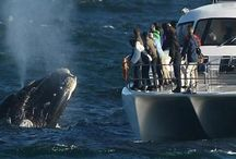 Whale watching & Hermanus winelands