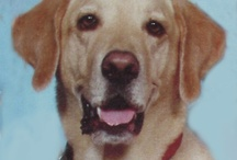 K9 Cancer  / I lost my beloved yellow lab Casey to K9 Cancer 02-03-09.  He was 9 1/2 years old and left us way too soon. I'm working to raise awareness of cause and prevention to all pet owners.   We had our first K9 Cancer Walk here in So. Florida last year and raised over $40,000.00 to support Morris Animal Foundations Canine Cancer Campaign.