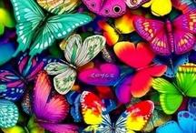 mariposas-butterfly-farfalle