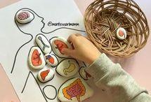 Montessori biologia