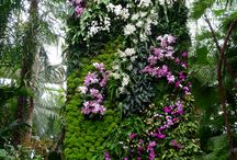 Jardines Verticales. / by Ma Virginia Cuartas R