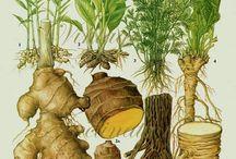 Herbs (Medicinal)