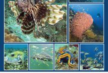 Underwater Mafia Island / The Blue World under the sea