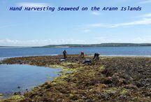 RÍ NA MARA Why Seaweed ? / Why is Seaweed  beneficial ?