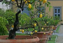 Garden:Container/Potted garden / Urns , pots, hanging baskets,flower boxes etc / by winifred Andre
