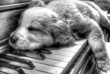 Puppy sleeping on piano. / This is me every time I practice piano
