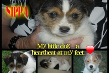 pets / my baby