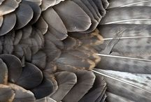 Detail of the bird wing