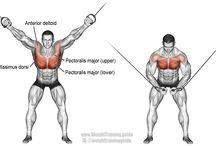 Mardi Bíceps