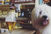 DOG FRIENDLY ACCOMODATION & EATING OUT