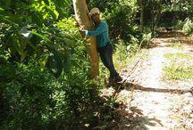 Art of Alas Wegode (Big Forest)