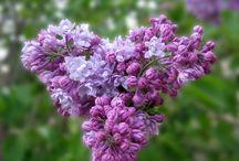 92.  Paars/blauw bloemen