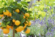 Léto 2015 v zahradě / Prodejní Zahrada Trees