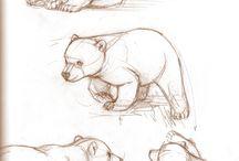 EGAB | Polar Bears