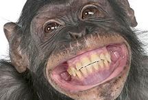 Animal Smiles