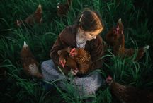Life at Handsome Brook Farm / An inside look at our farms and the daily lives of our hens.