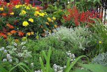 1960s garden