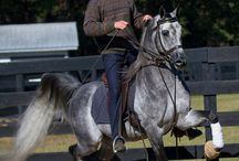 :. Saddle Seat .: