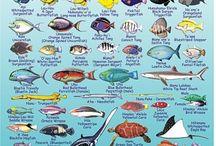 Fishing Hawaii / Events, tips, enjoying the sport!
