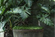 Arbustos de sombra