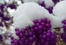 Purple Rain / by Shayla Ross