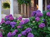 Garden Ideas / by Stacey Heuer