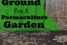 Organic / Permaculture / Using Mother Nature to grow food not lawns