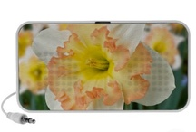 Apricot Cream Daffodil / Apricot Cream Daffodil Products for sale / by Butterflies Are Blooming