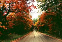 jz: autumn