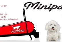 Buy the MiniPacer dog treadmill