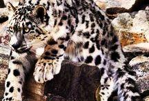 Beautiful animals / I love animals - especialy cats