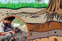 Grade 3 Science: Soils / by Nicole Holloway