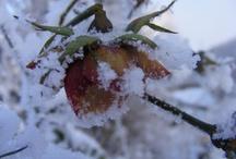 Winter an der Ostsee und in Mecklenburg / Vorpommern / Winter on the Baltic Sea and in Mecklenburg / Vorpommern #winter #Baltic #Ostsee #Mecklenburg #Vorpommern
