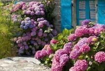Blommer / Blomster dryss