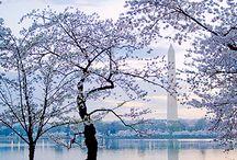 USA: Washington