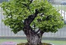 Bonsai & nature / Beatiful nature