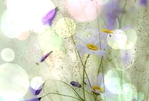 Wild and other flowers, sensitive photos