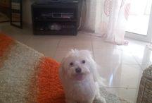 Toni / My cute baby dog