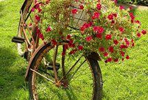 Vélos romantiques / by Warda Sakoff