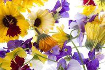 gourmet ingredients - fruit, flowers, herbs, spices and vegetables