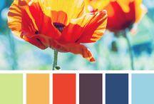 Renk Uyumları