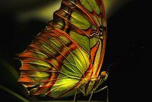 Papillons pour ma gentille copine