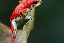 Reference - Animal Photography