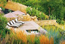 Landscape and Plants