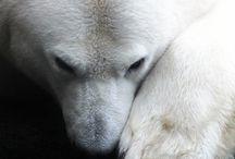 Animal Kingdom - Bears
