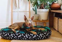 MODERN HOME * DOG BEDS / Create a modern space within your home for your favorite canine. Shop at www.nicedigs.com.au