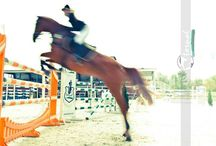 horses in action!